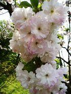 Blütentraum im Frühling