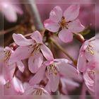Blütentraum in Rosa -