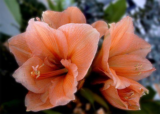 Blütentraum mit PS bearbeitet