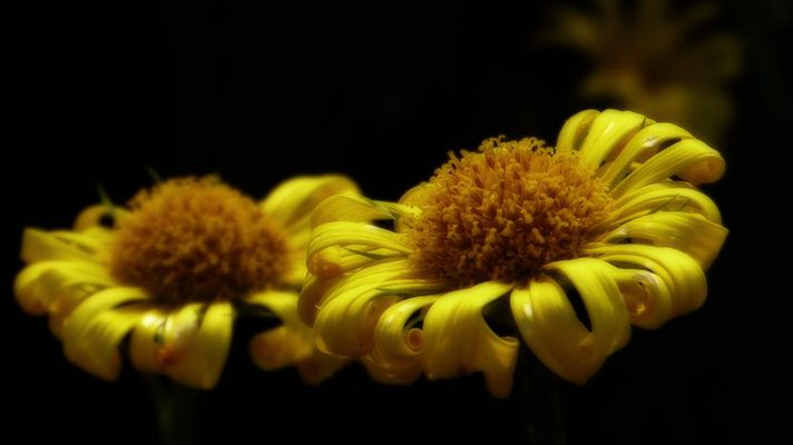 """Blütenuniversum"""