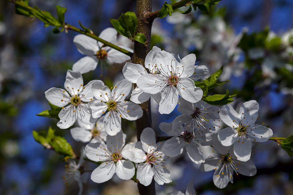 Blütenweiss