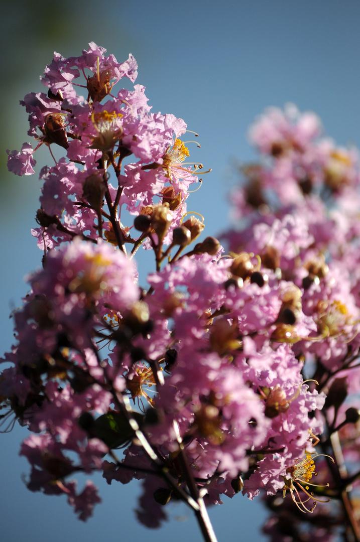 Blütenwolke