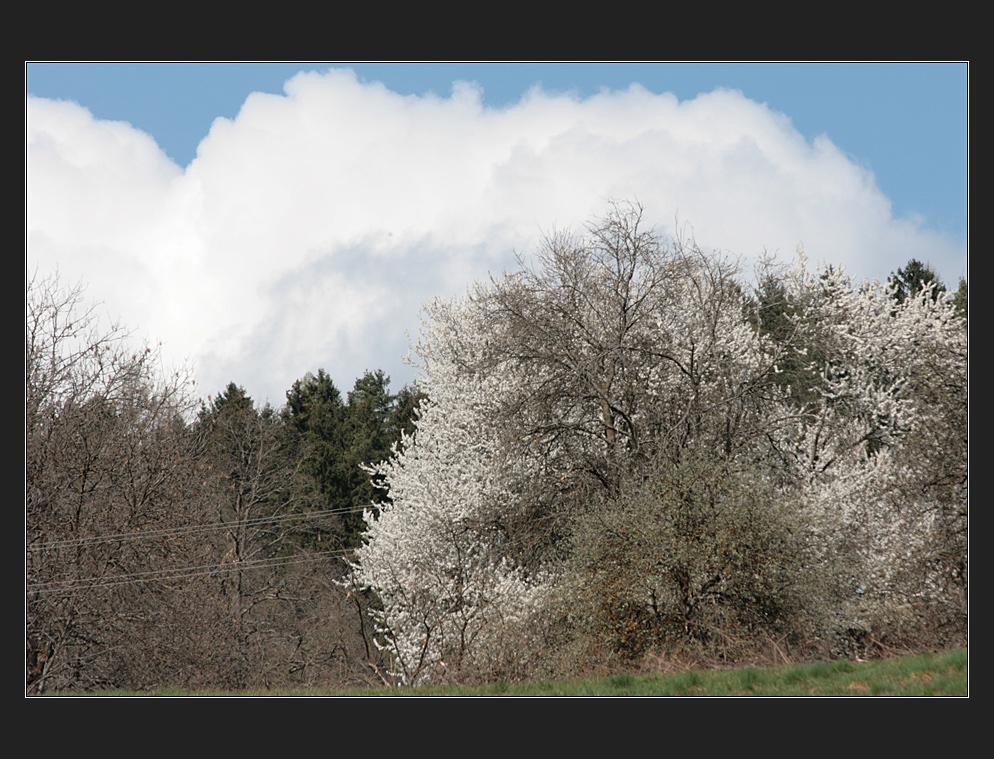 blüten,wolken, on lines
