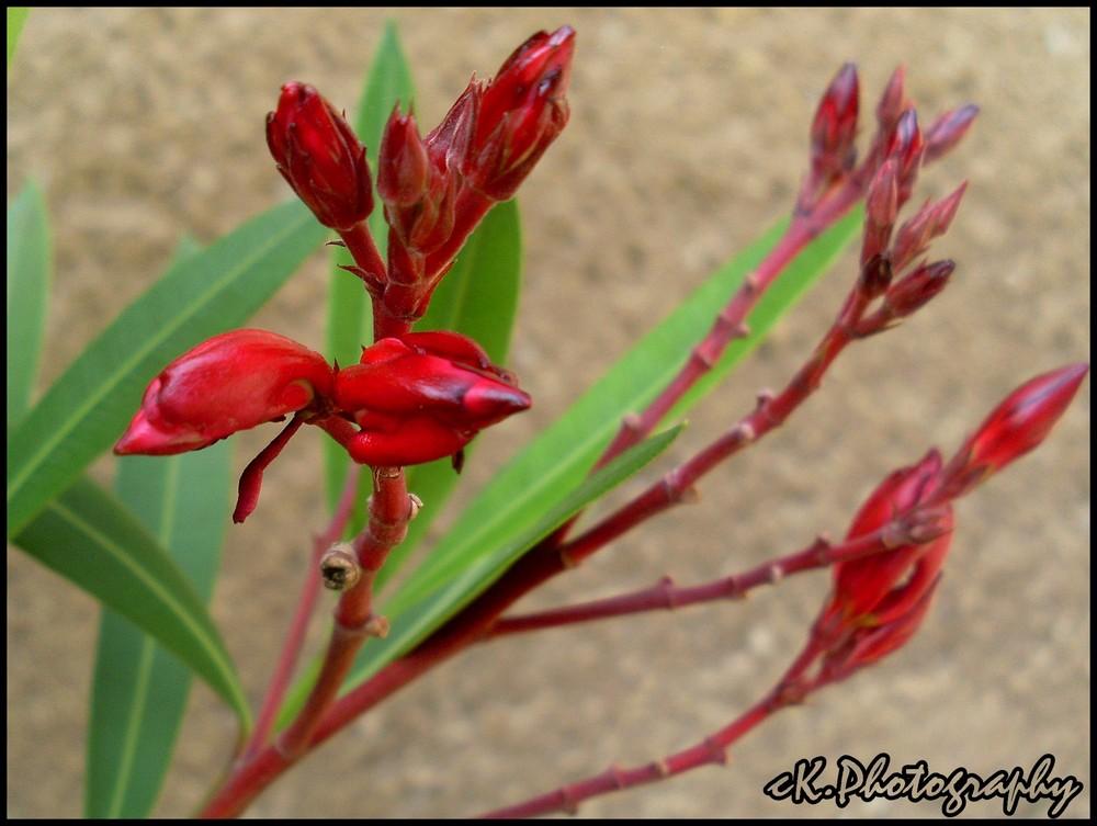 Blütenwunder mit Farbpracht.