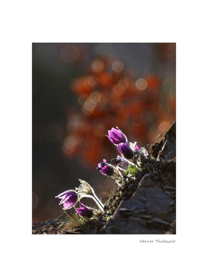 Blütenwunder Sonderrain