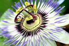 Blütenzauber