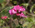 Blütenzauber-1
