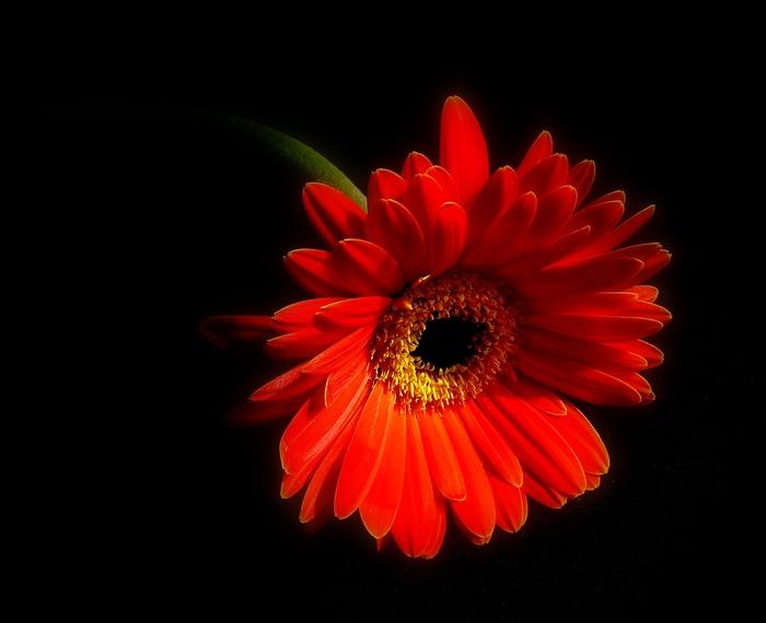 Blütenzauber ...2...