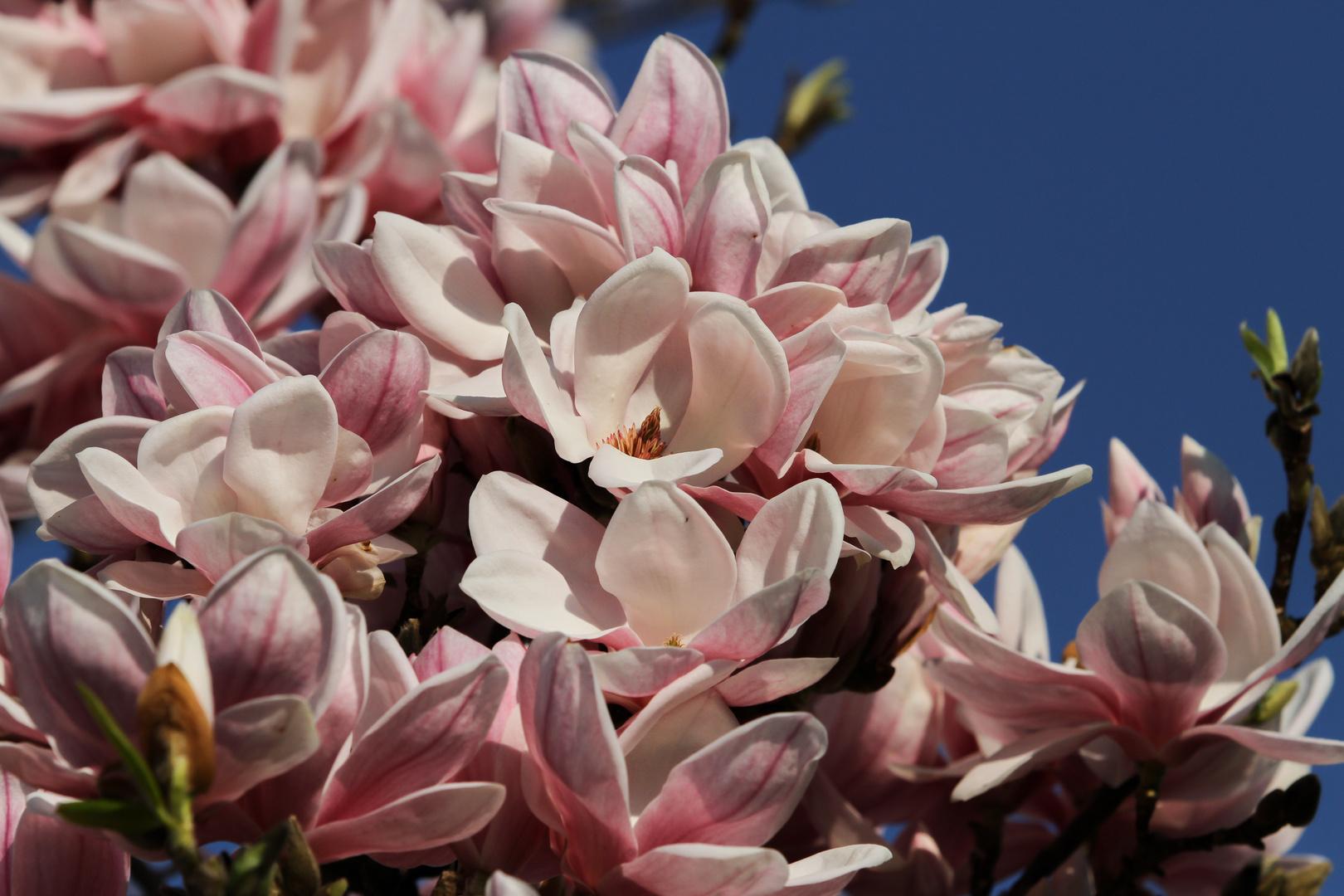 Blütenzauber #3