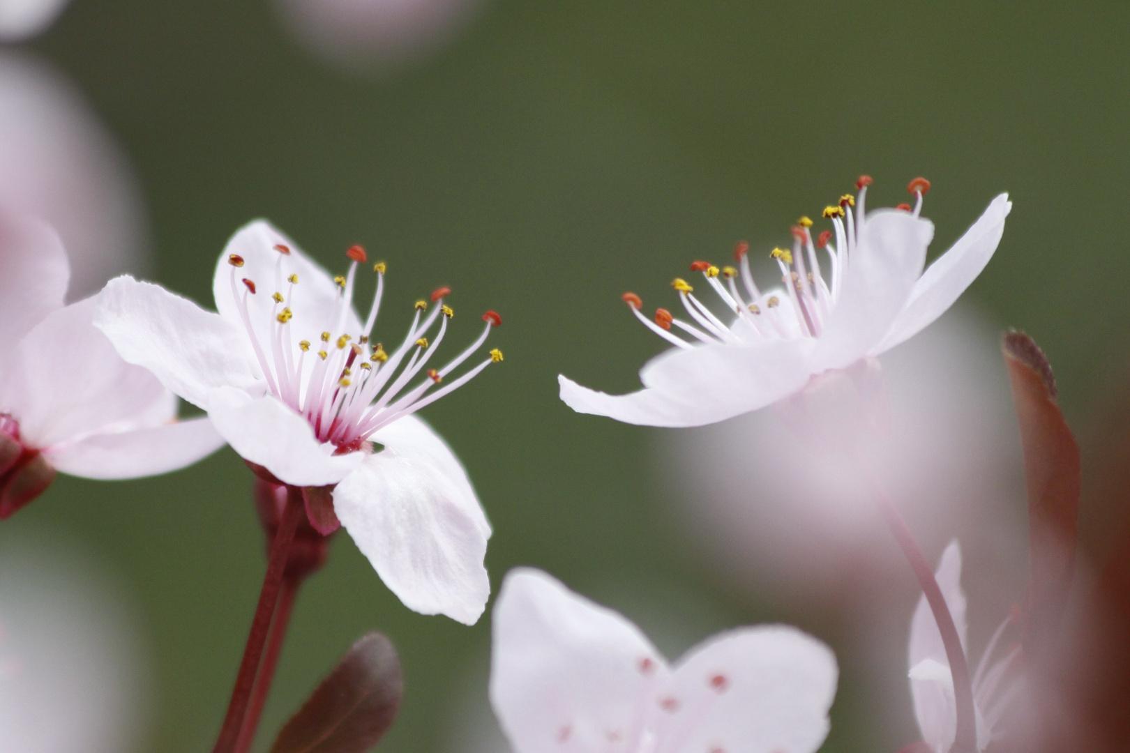 '' Blütenzauber ''