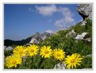 Blütenzauber auf 2200 Meter Seehöhe