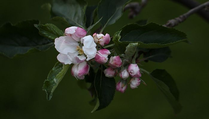 Blütenzauber...