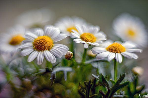 Blütenzauber Gelb und Weiss