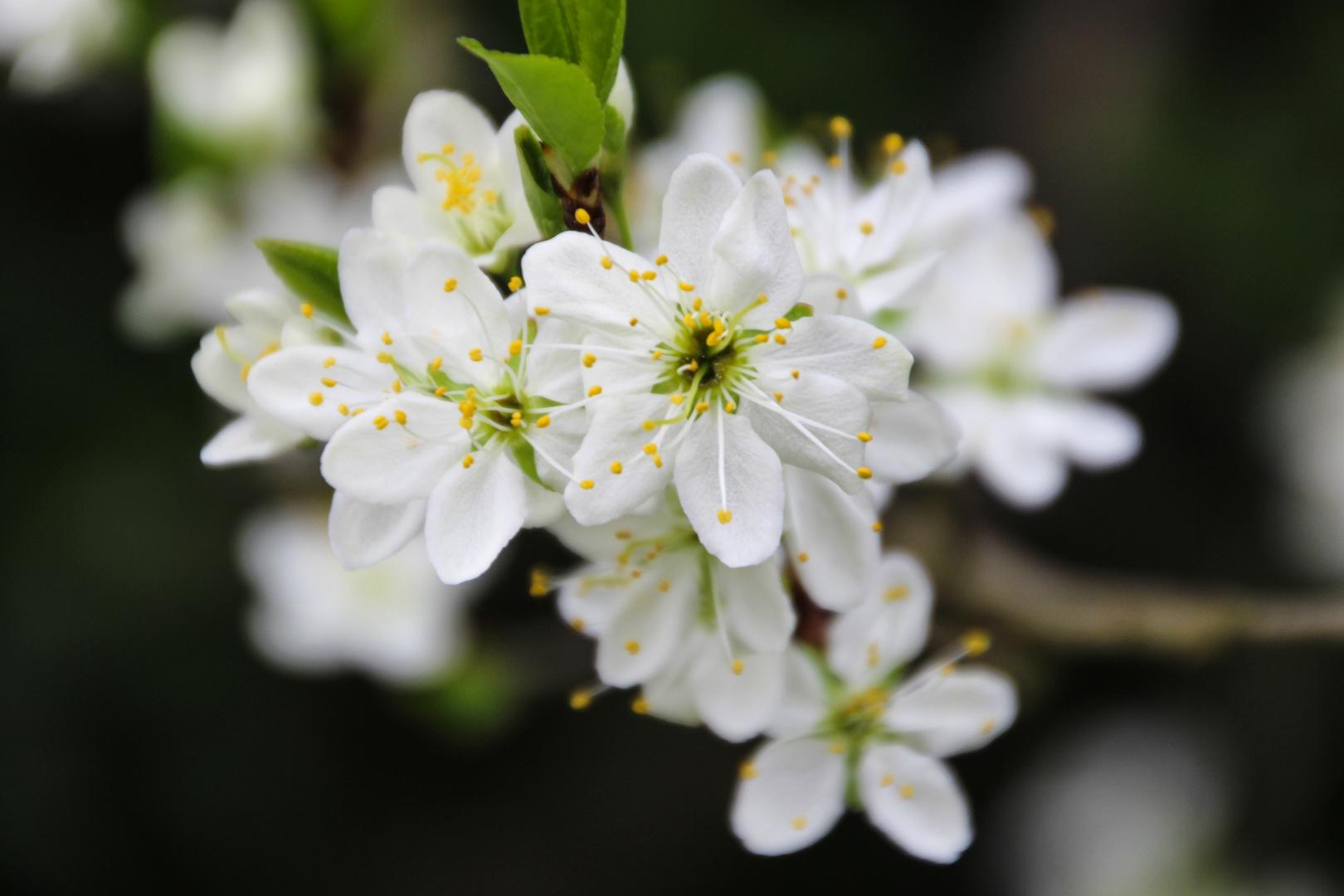 Blütenzauber II.