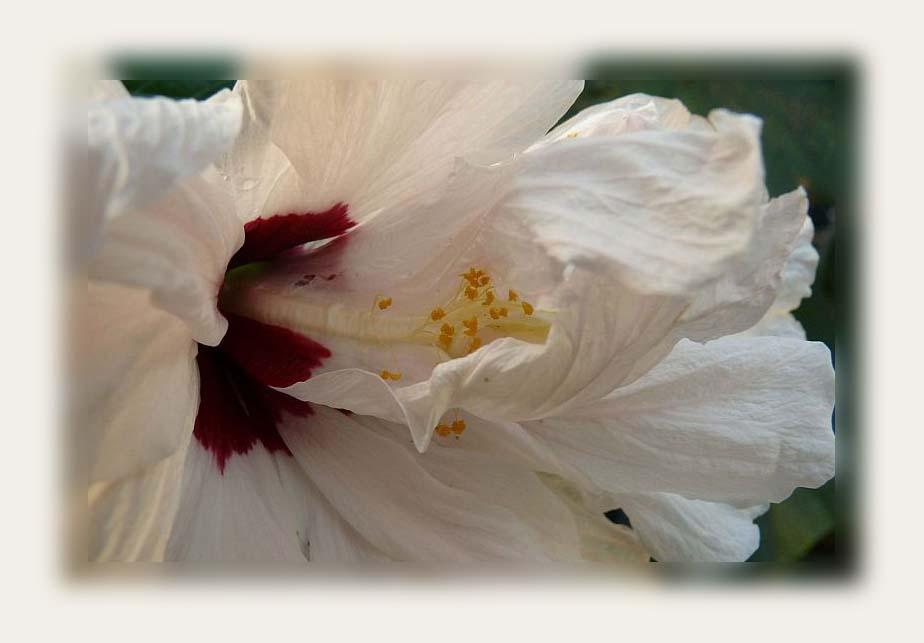Blütenzauber II