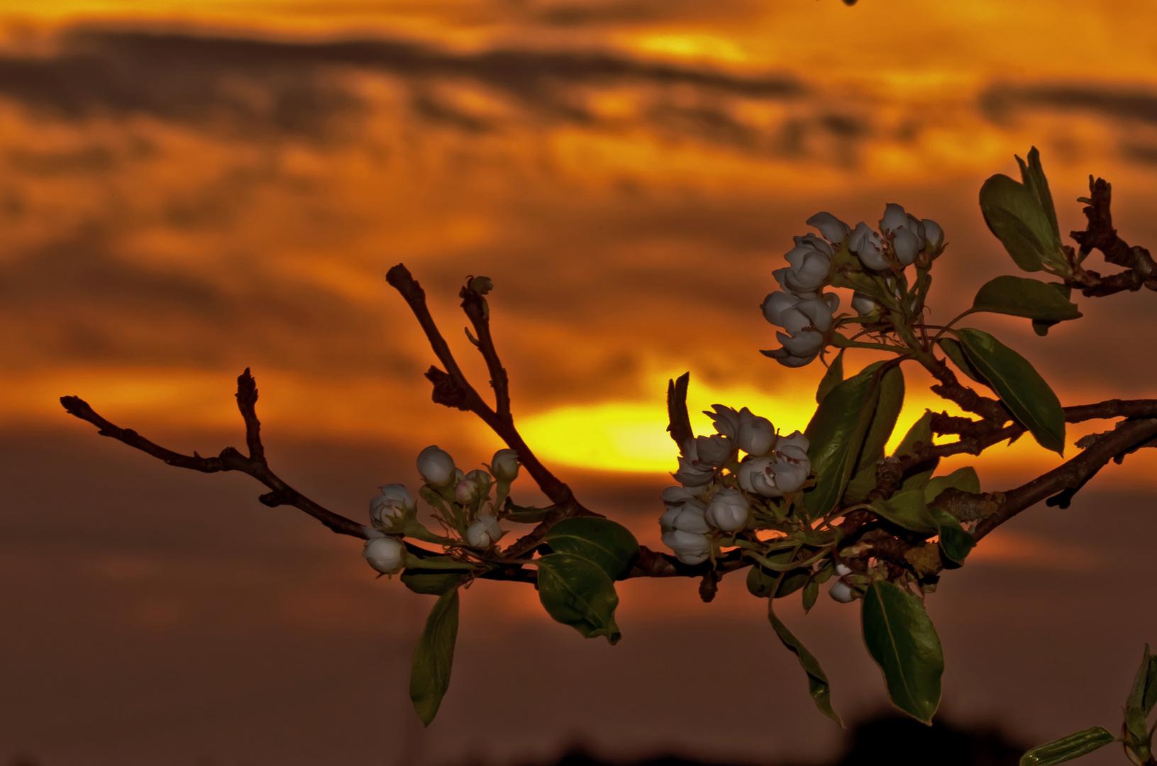 Blütenzauber im Abendrot