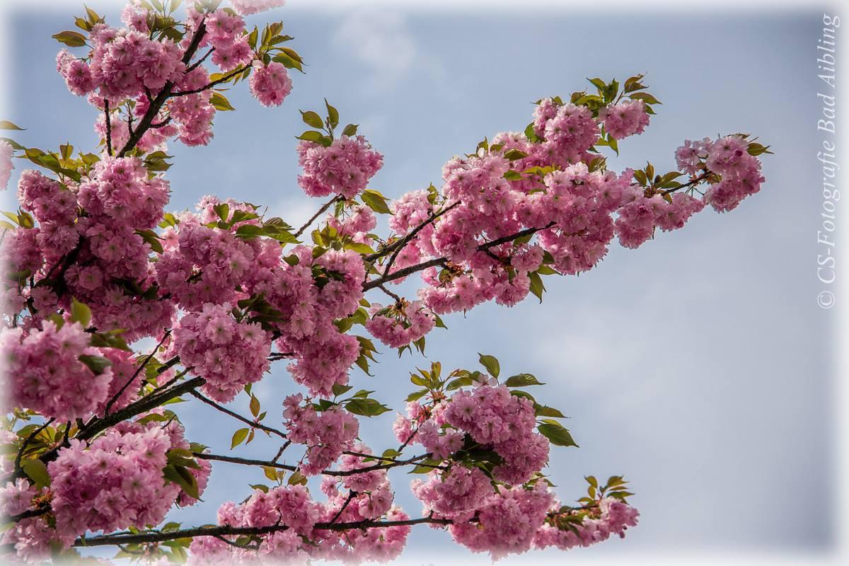 Blütenzauber im Frühling