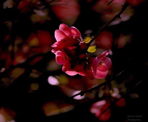 Blütenzauber im Gegenlicht