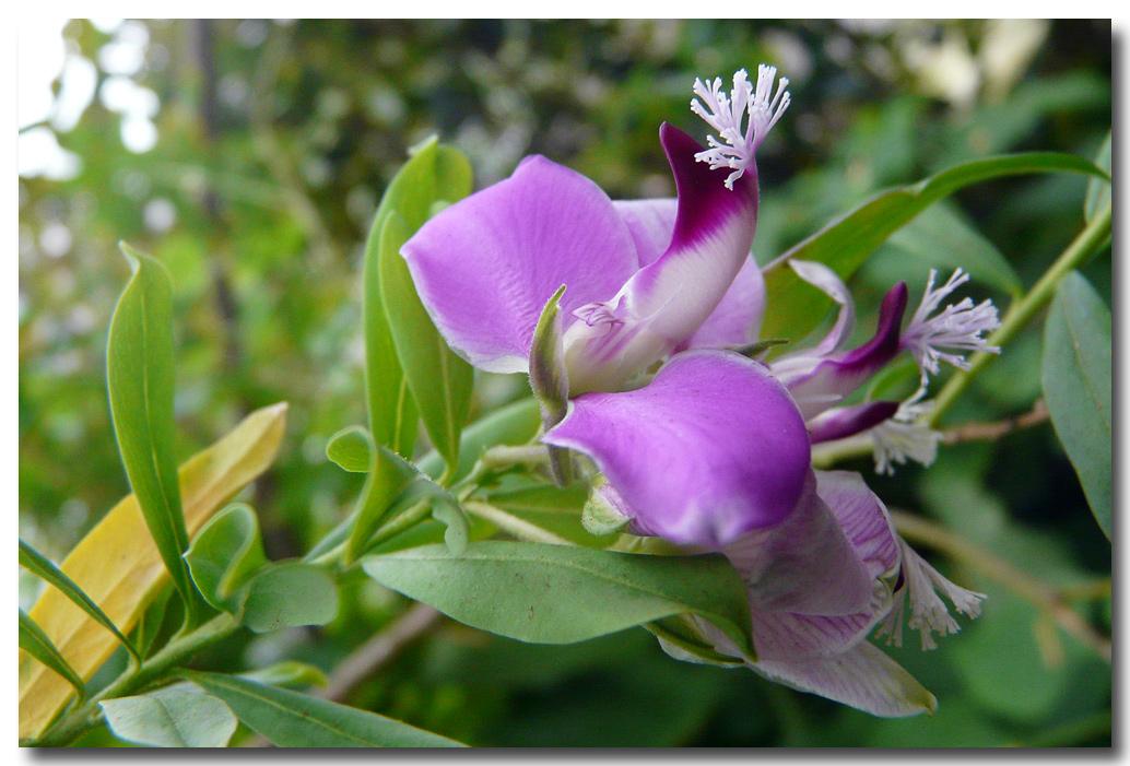 Blütenzauber in blau-weiss