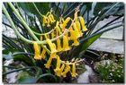 Blütenzauber in gelb