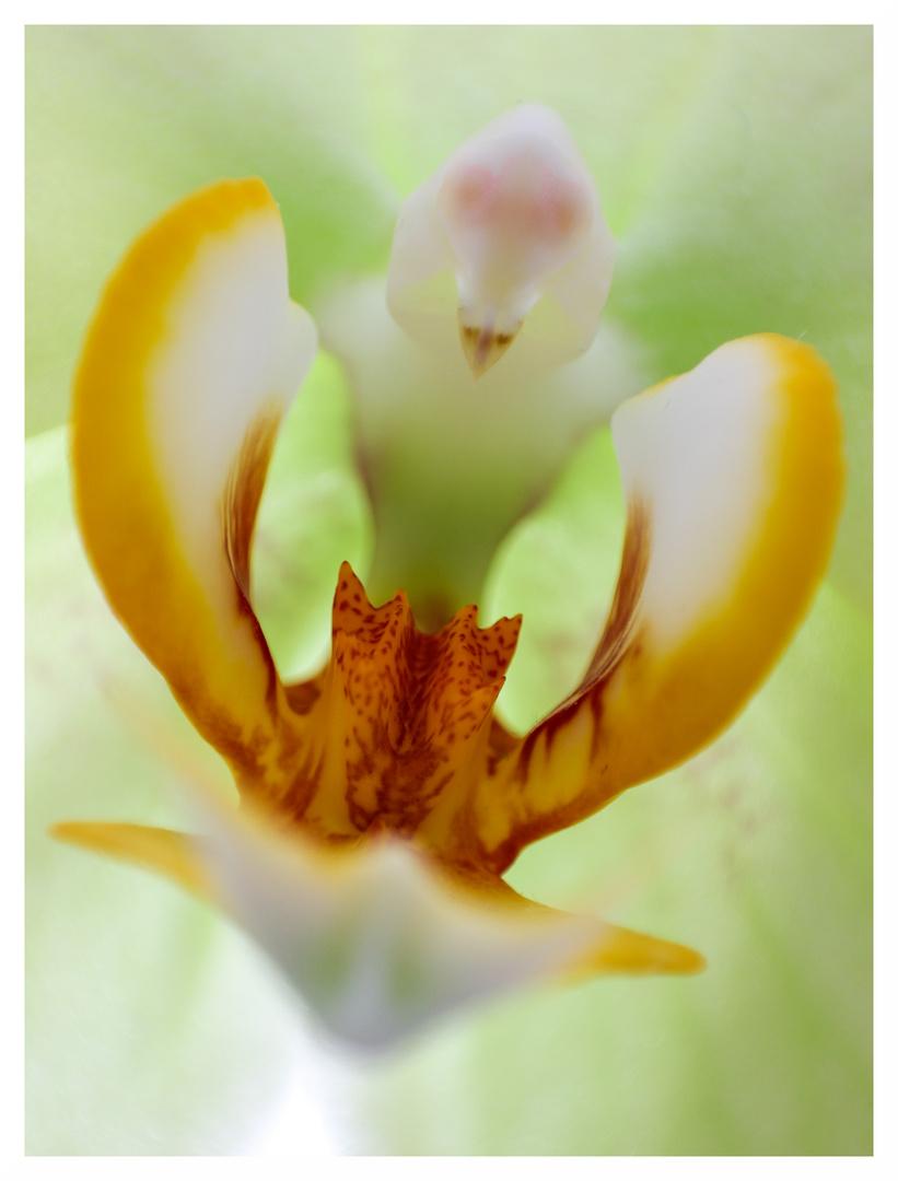 Blütenzauber IV. Orchidee