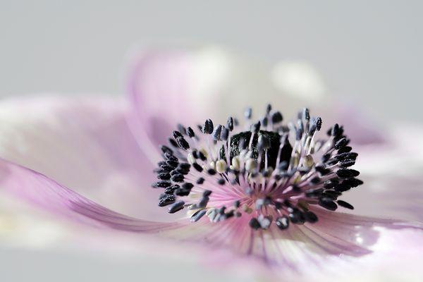 Blütenzauber (Teil 2)