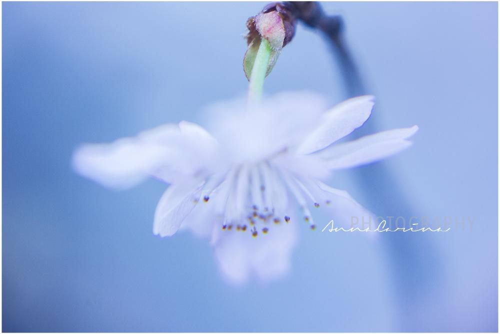 Blütenzauber01