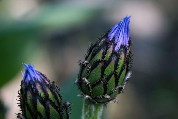 Blütenzauber4