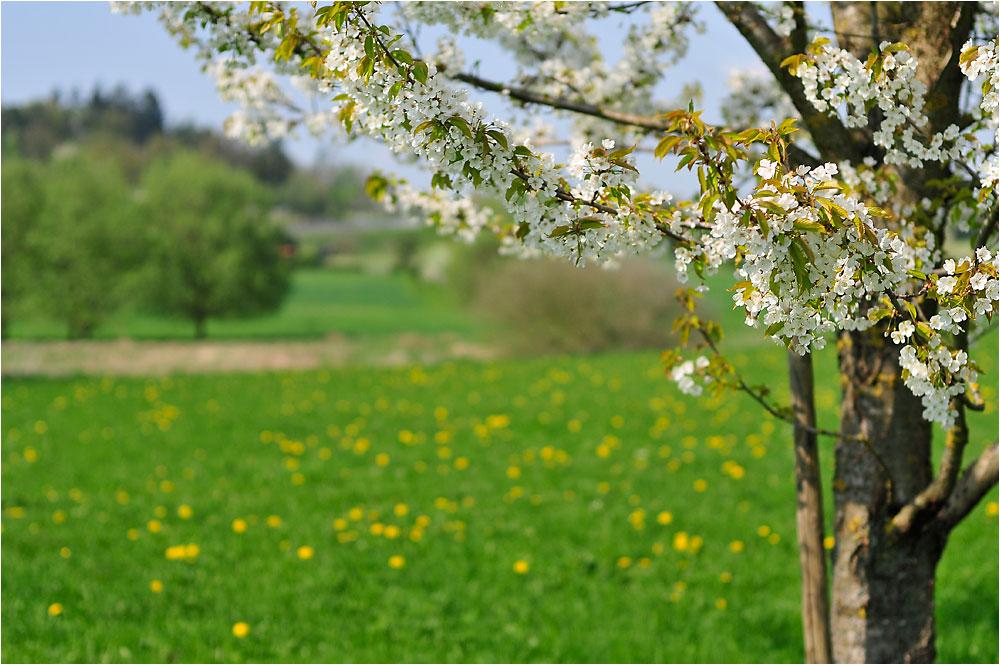 Blütenzeit - 5