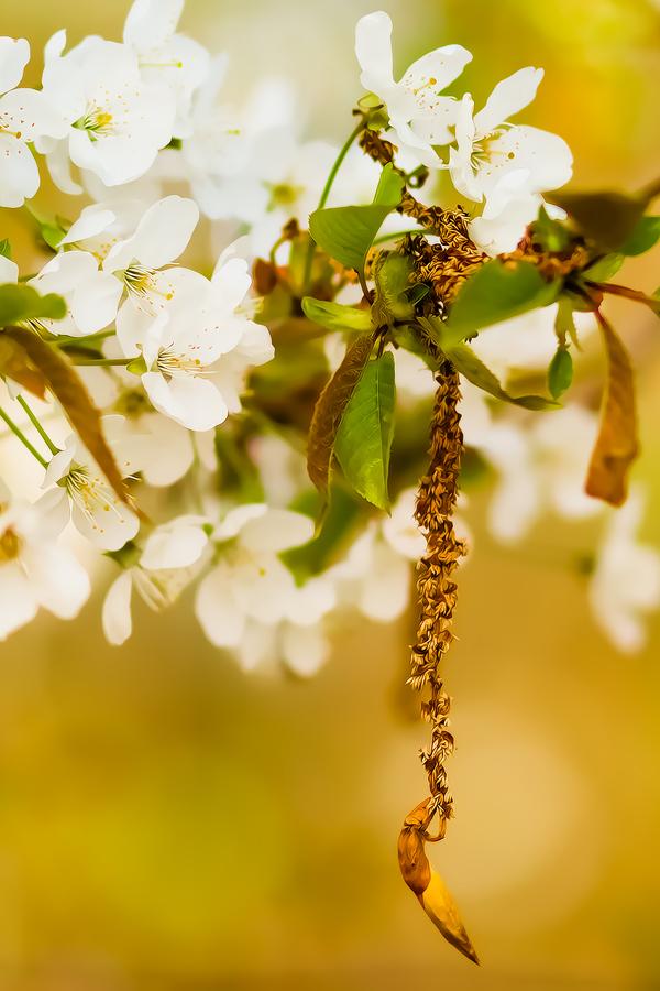 Blütenzeit