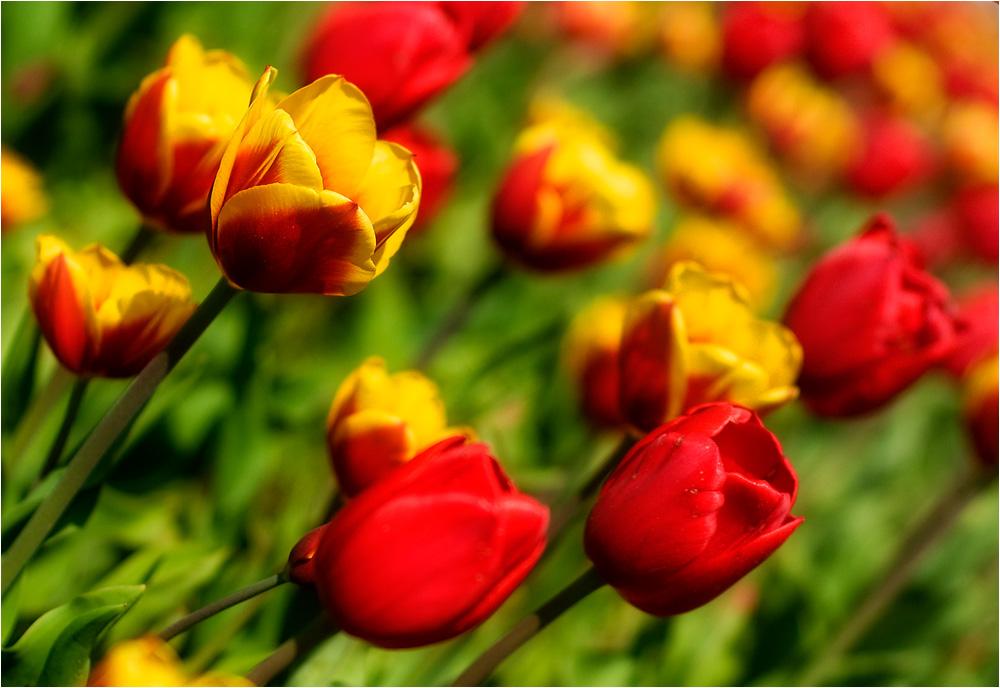 Blütenzeit - 6