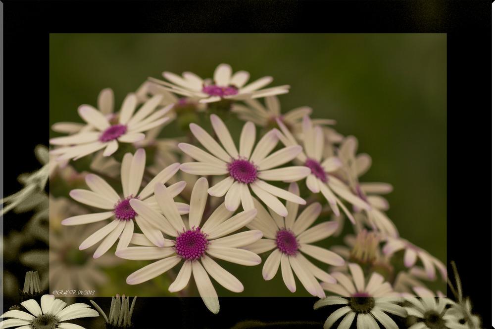 Blütenzeit, schöne Zeit . . . . .