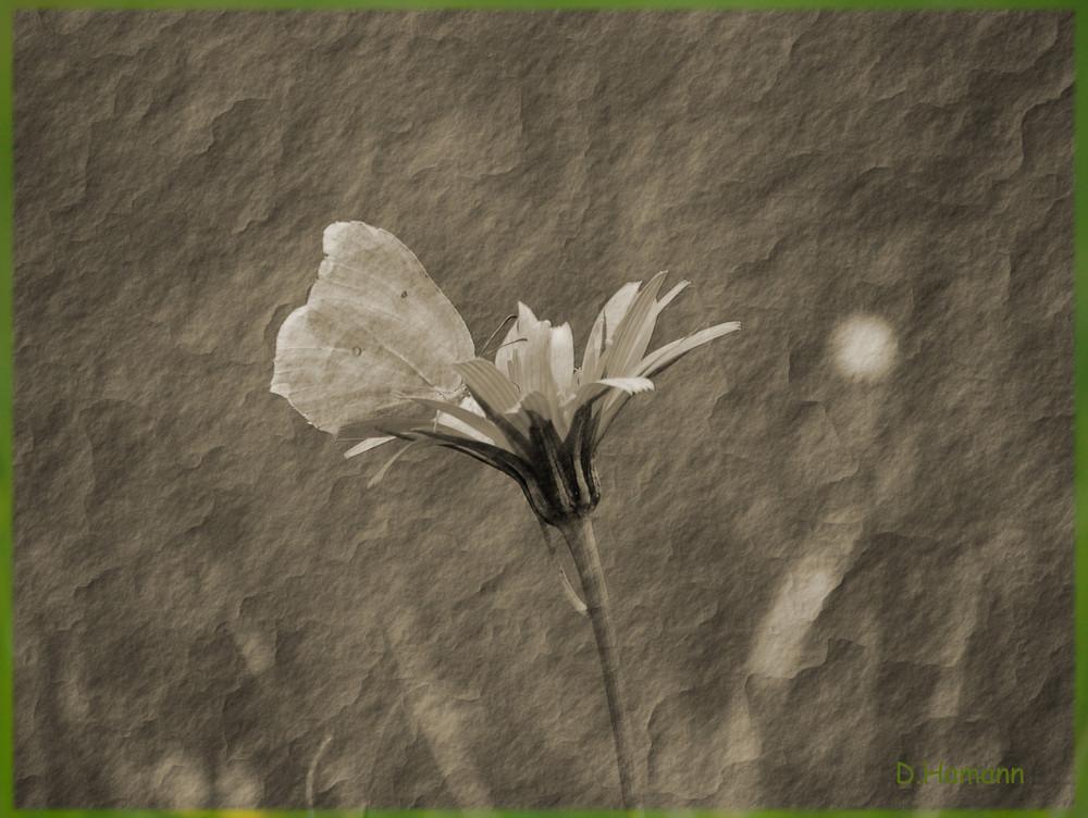 Blüte+Schmetterling