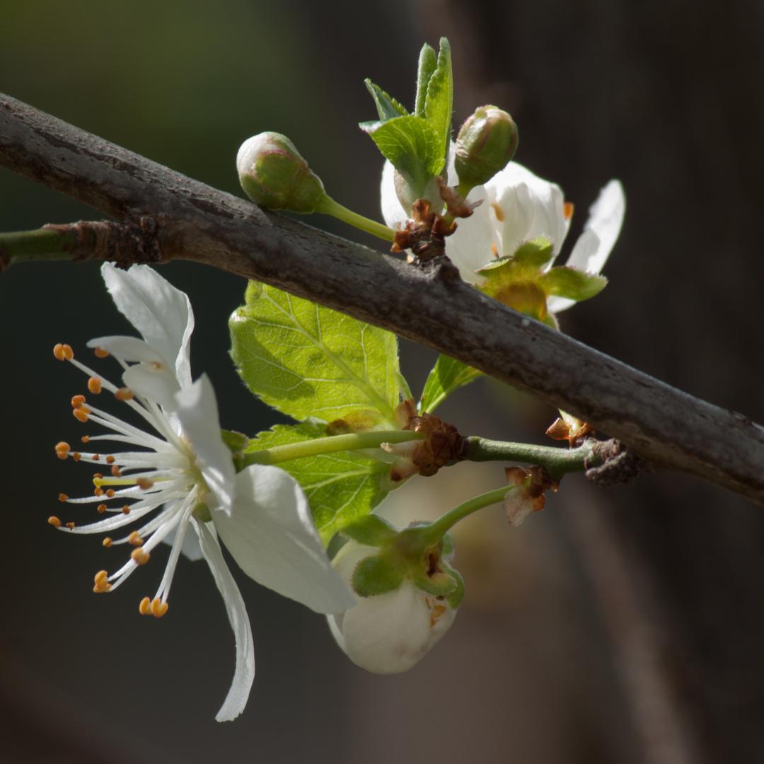 Blütezeit 1