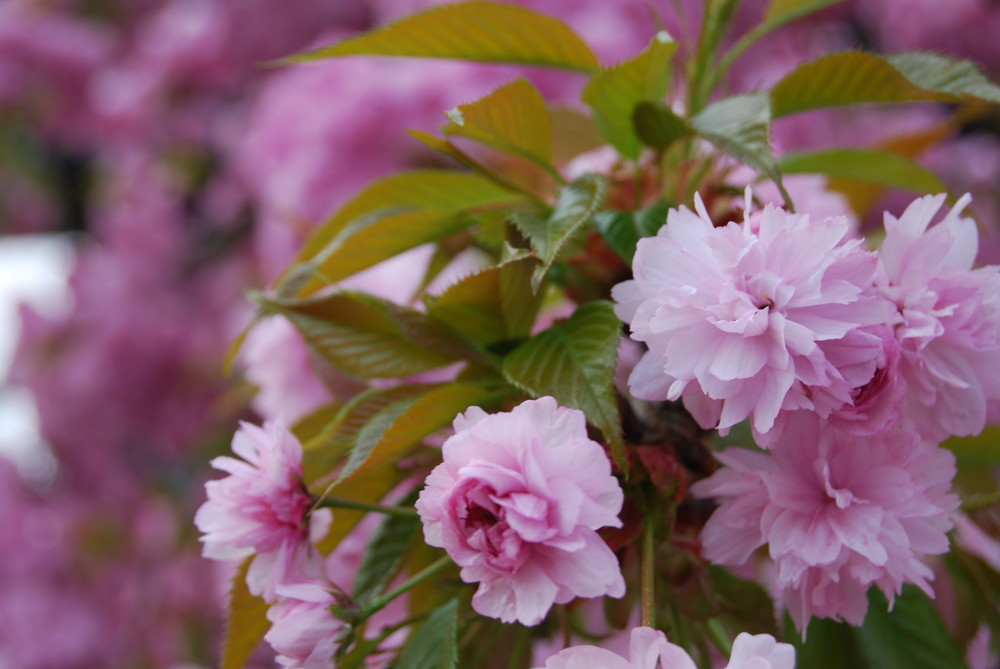 Blütezeit am Ostersonntag