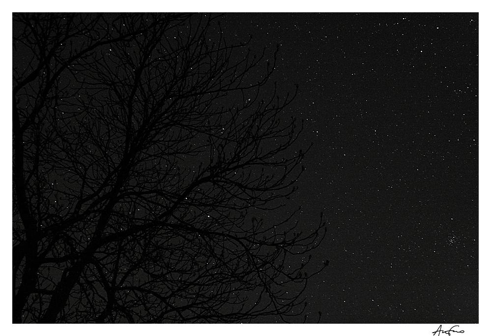 Blütezeit der Sternenfrucht
