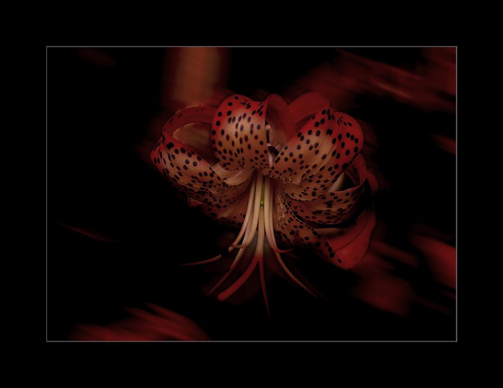 Blütte in Rot