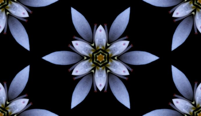 Blume 06