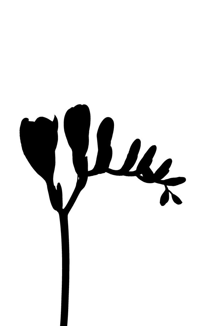 Blume 1