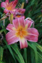 Blume 2