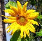 Blume 2011/3