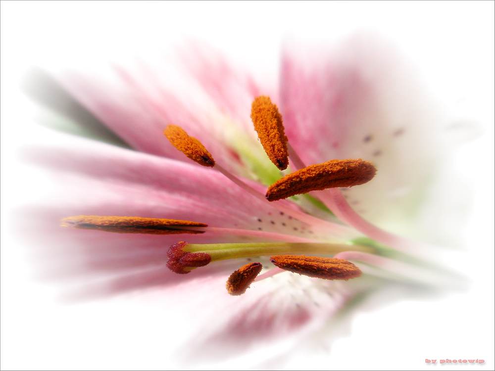Blume...
