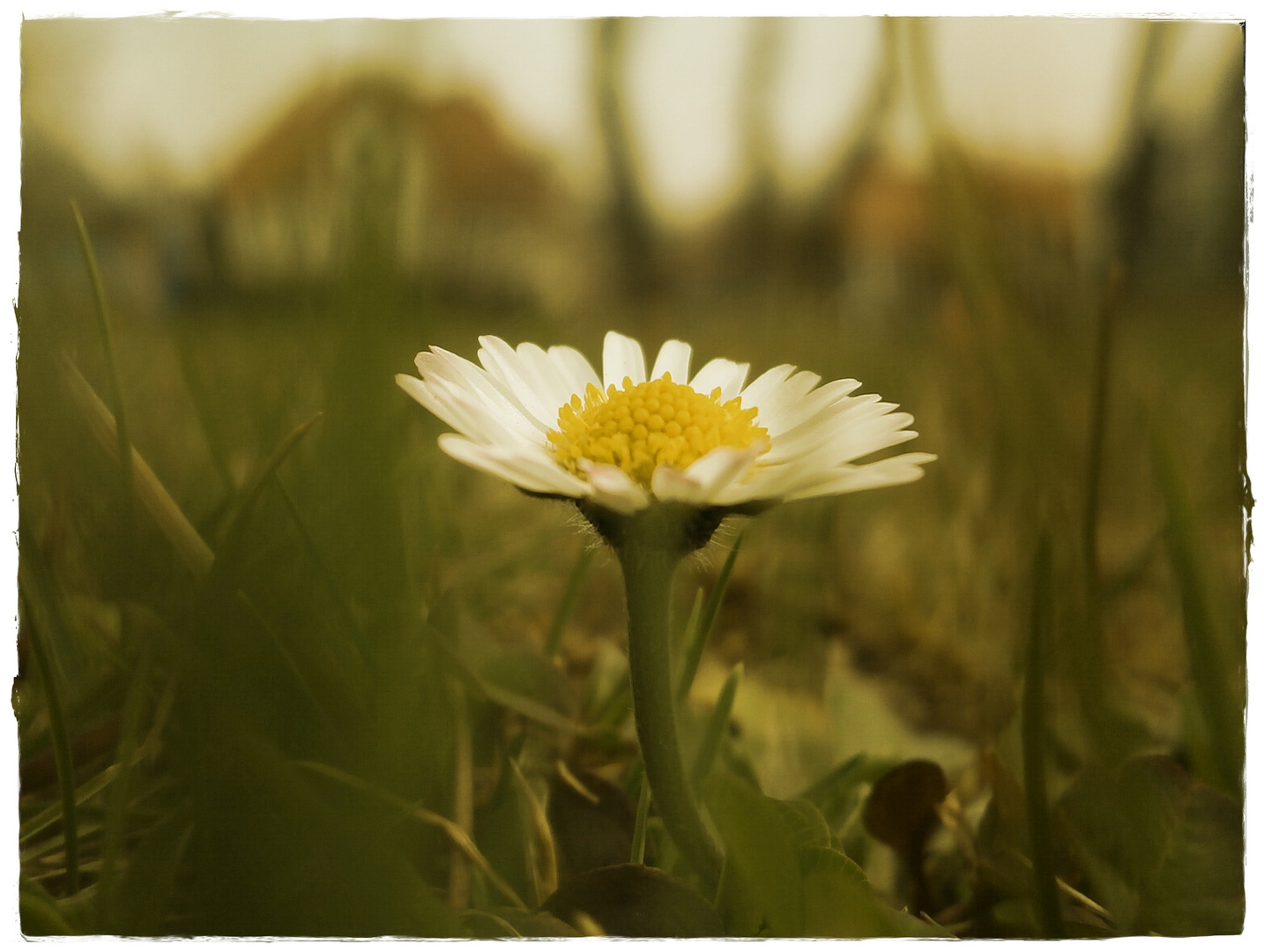 ........Blume.........
