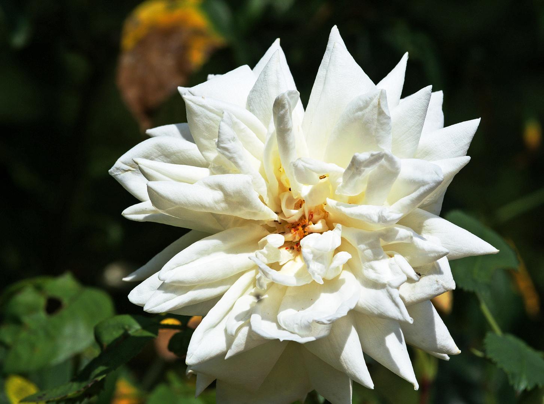 Blume 68 2013
