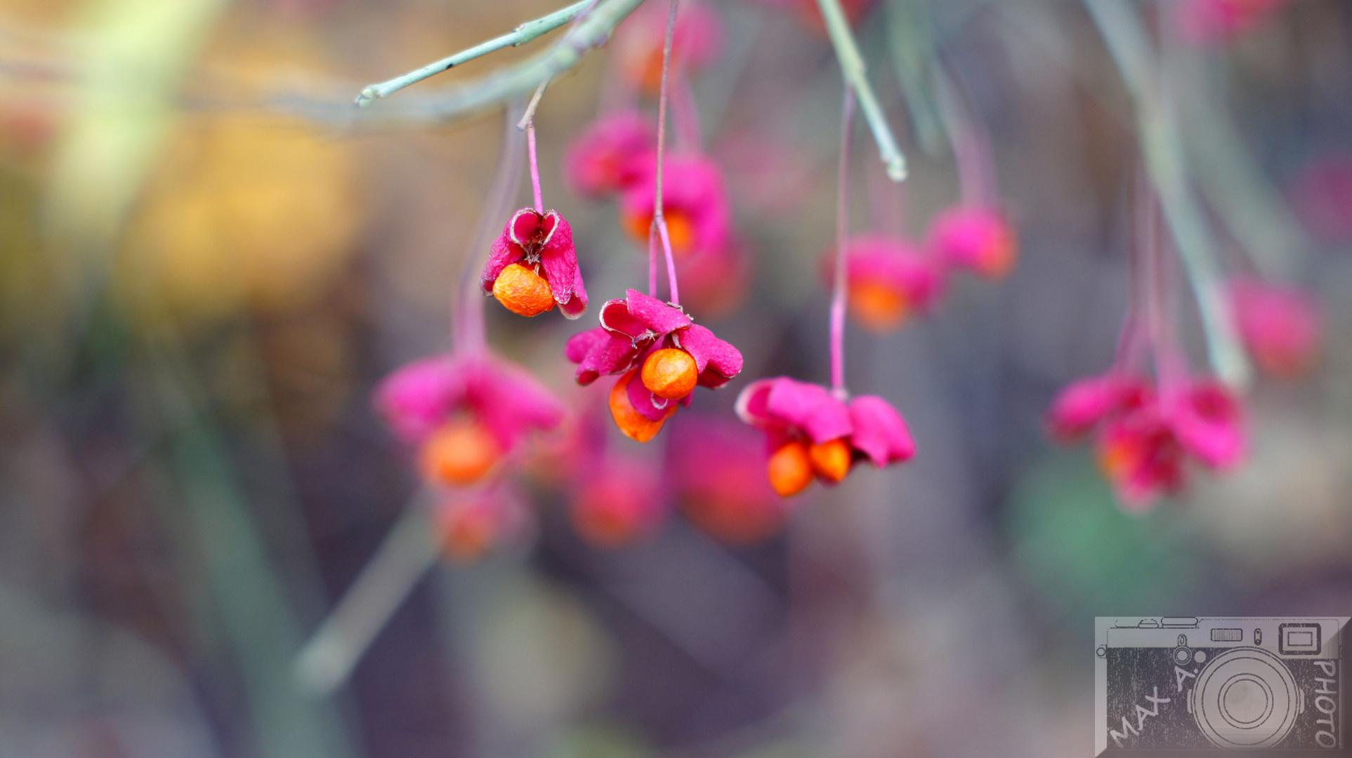 Blume ^^
