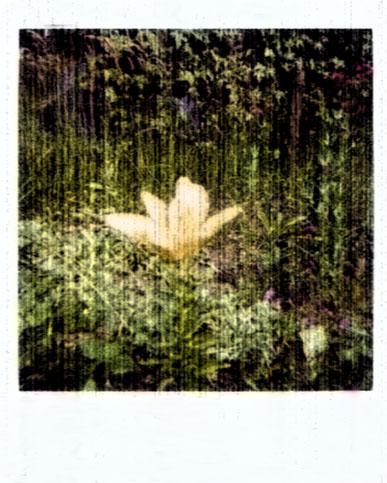Blume am abend