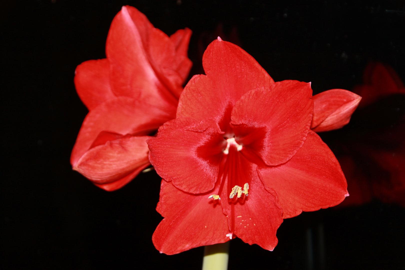 Blume am Mittwoch