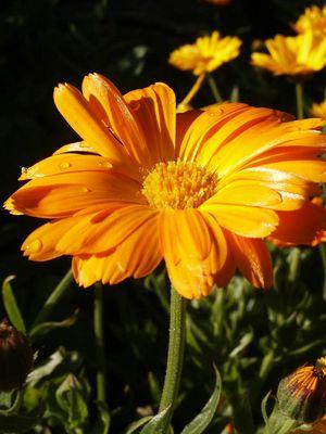 Blume am Morgen...