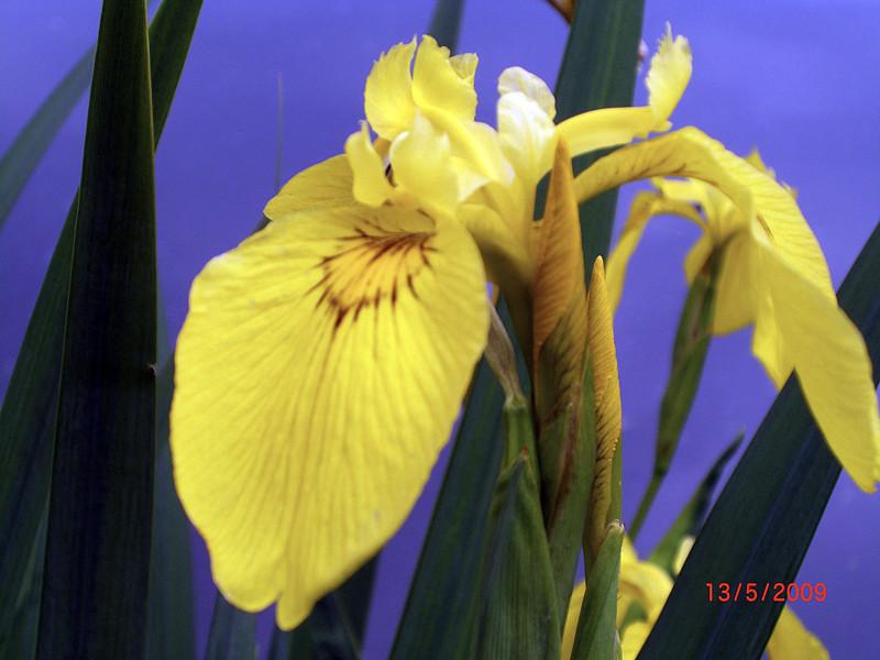 Blume am See