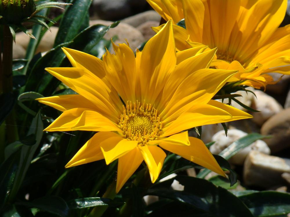 Blume am Teich
